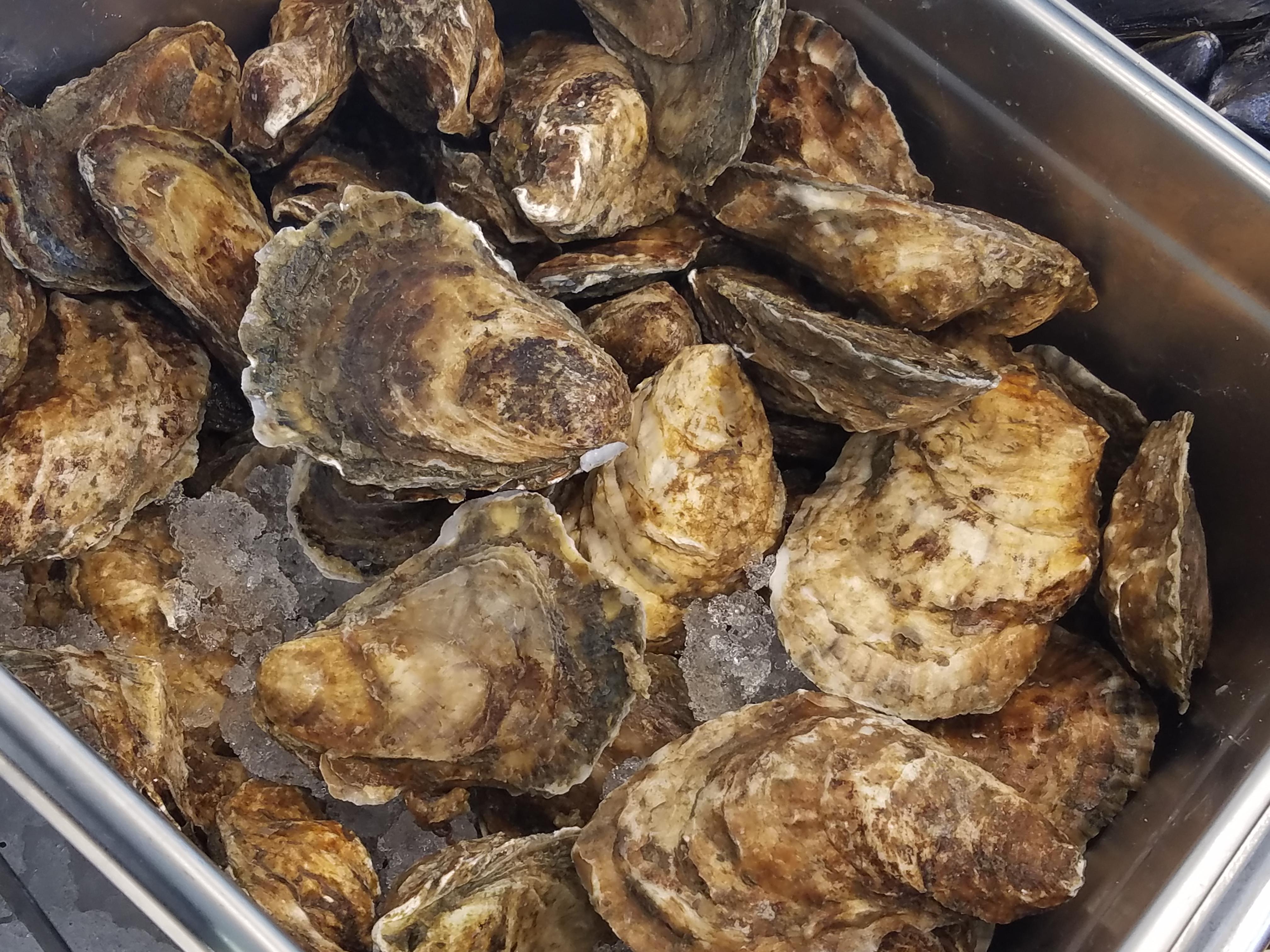 "Fresh Chappaquiddick ""Chappy"" Oysters"